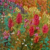 Dawn Thrasher - Indian Paint Brush